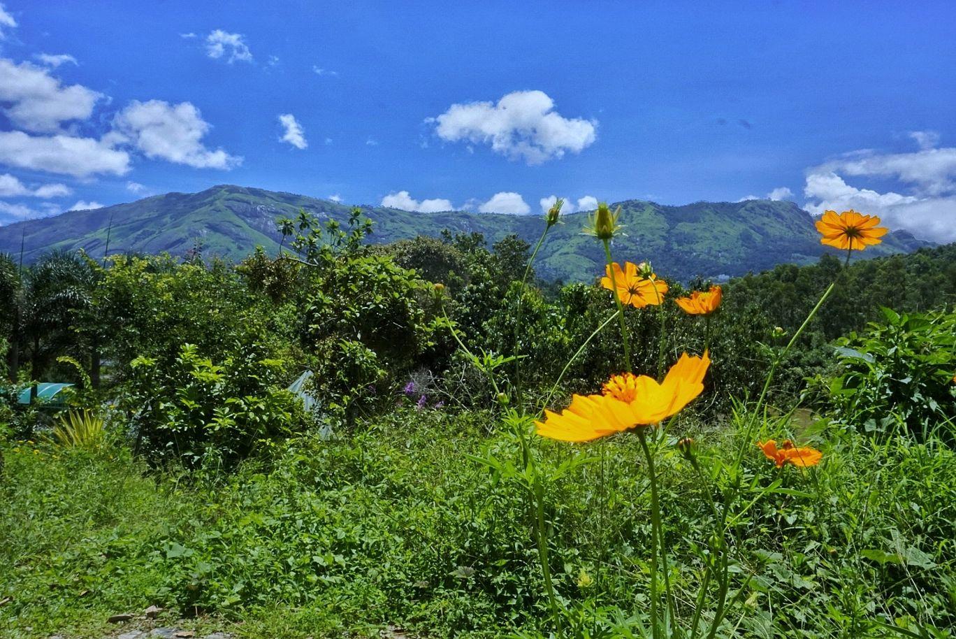 Photo of Munnar By Julie Chowdhury
