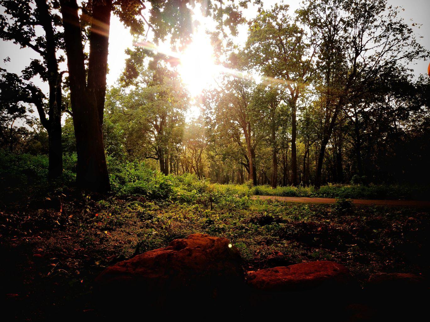 Photo of Jim Corbett National Park By Namrata Ladha