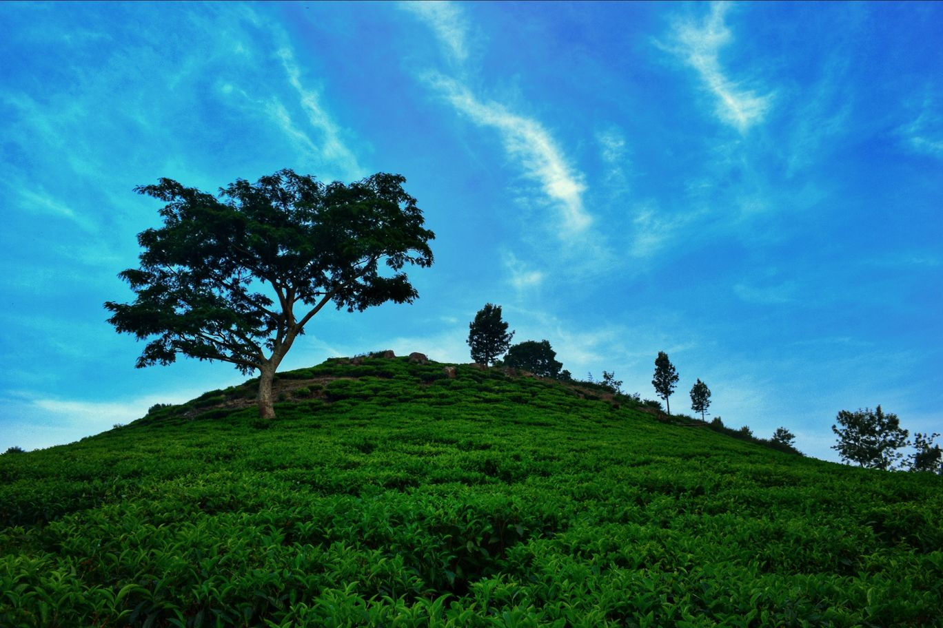 Photo of Ooty By Sharanesh Raman