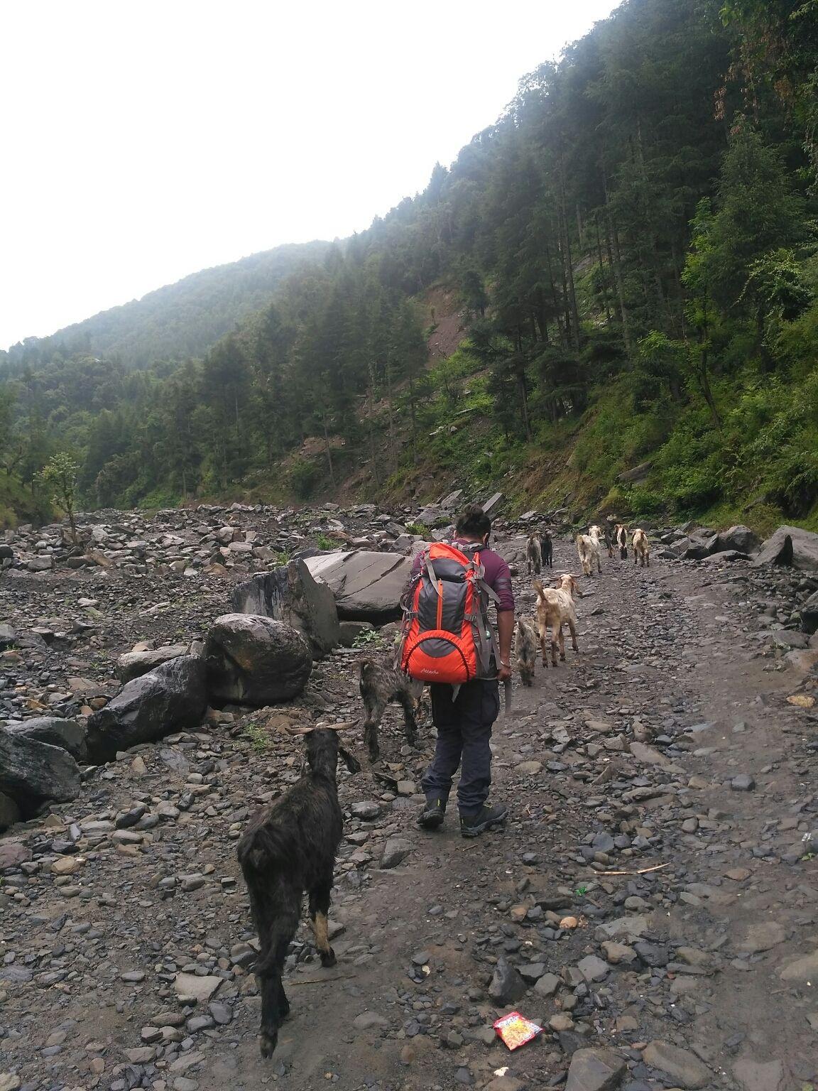 Photo of Prashar Lake Trekking By Dr Neeraj Garg