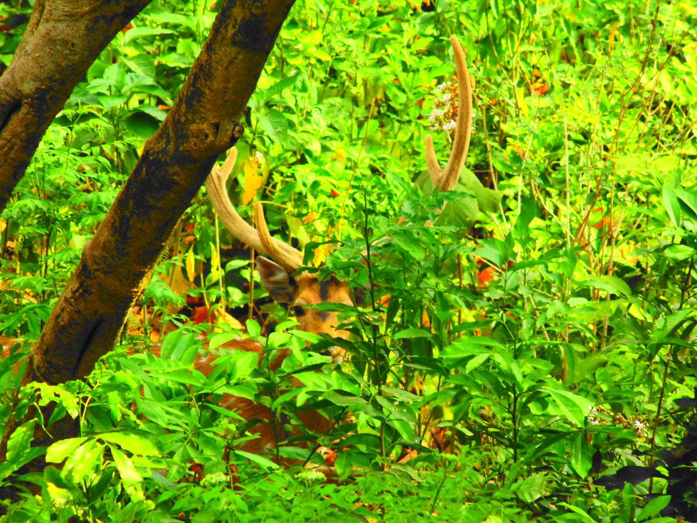 Photo of Jim Corbett National Park By Aaditya Vikram