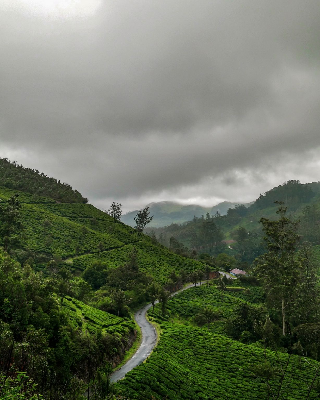 Photo of Munnar By Siddhant S Soni