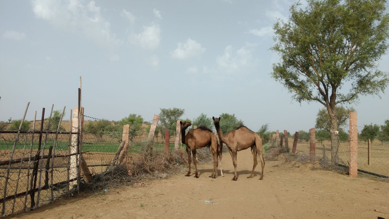 Photo of Rajasthan By Surabhi Pugalia