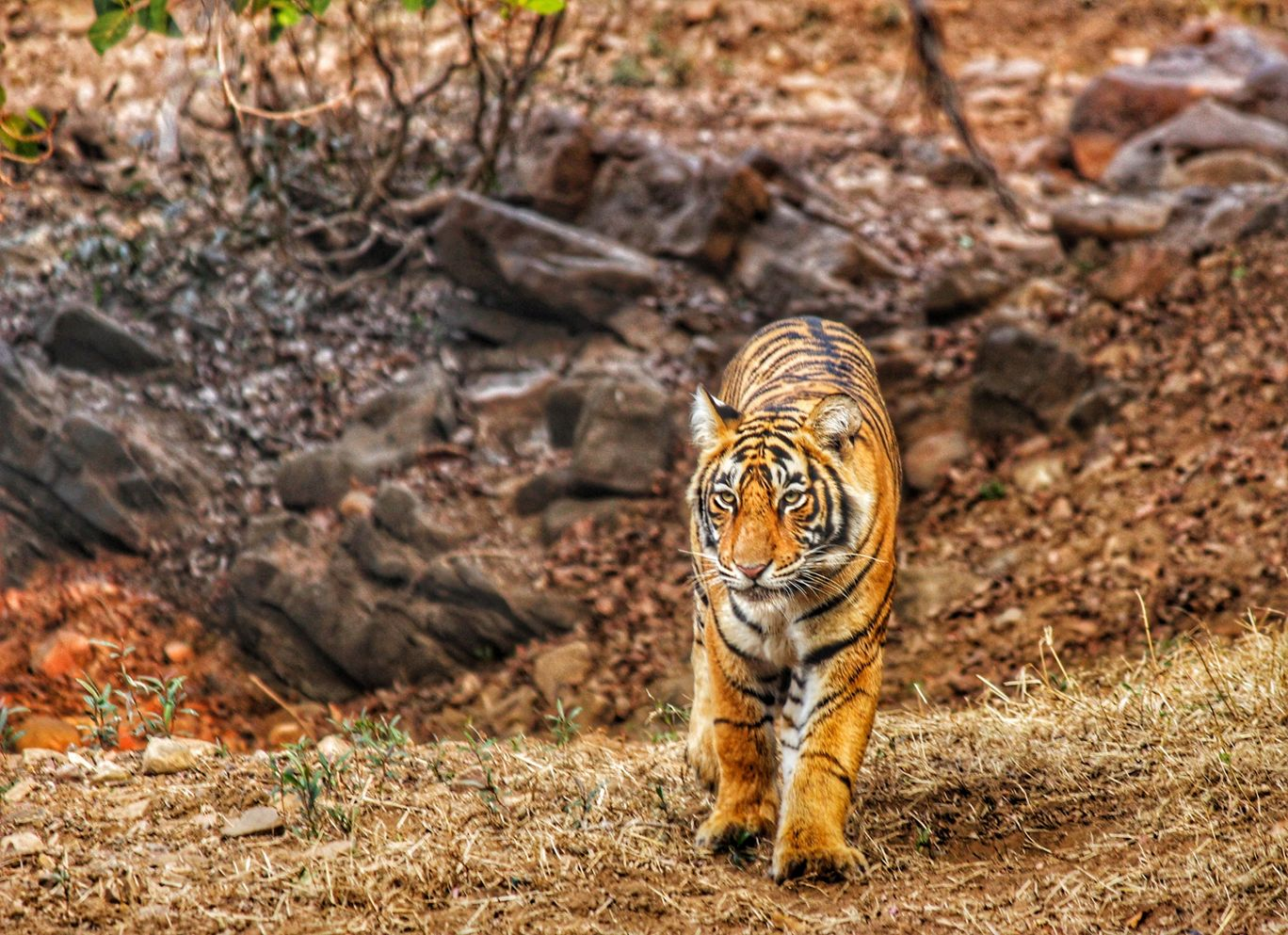 Photo of Ranthambore National Park By Nupur