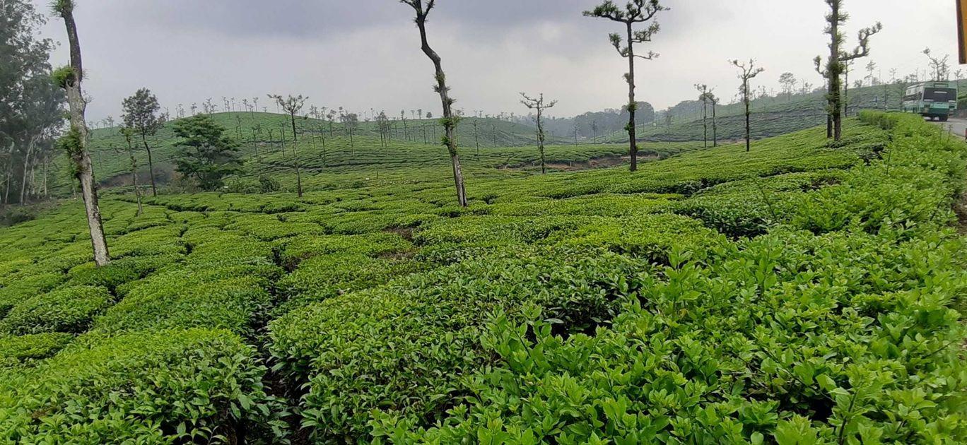 Photo of Valparai By Gowtham Saravanan