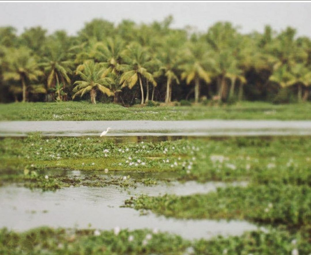 Photo of Kerala By Frontline View