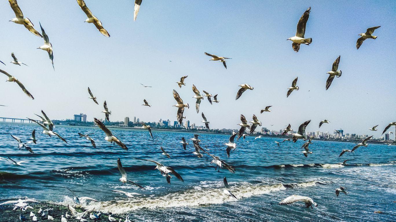 Photo of Mumbai By Jiten Godhania