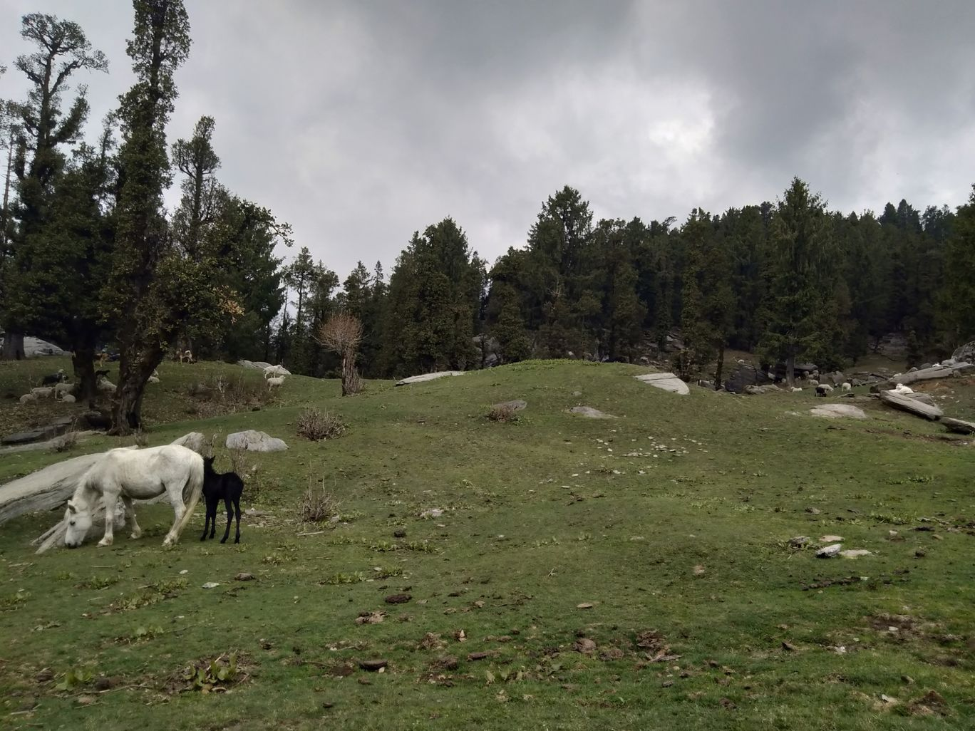 Photo of Himachal Pradesh By Nishant