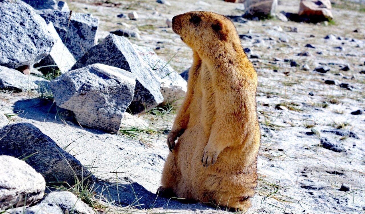 Photo of Ladakh By Rahul Singh Choudhary
