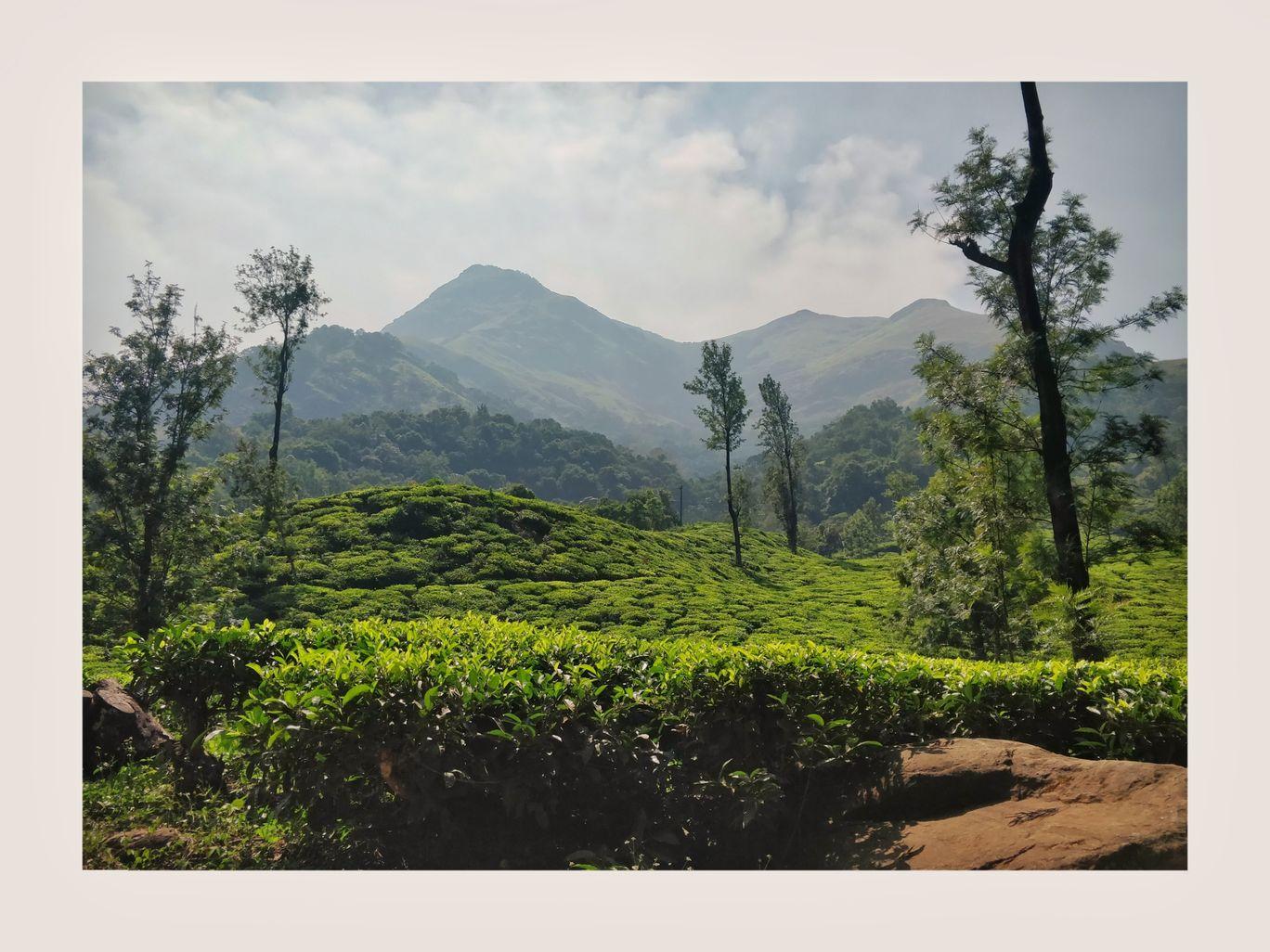 Photo of Wayanad By Niladrit Mondal