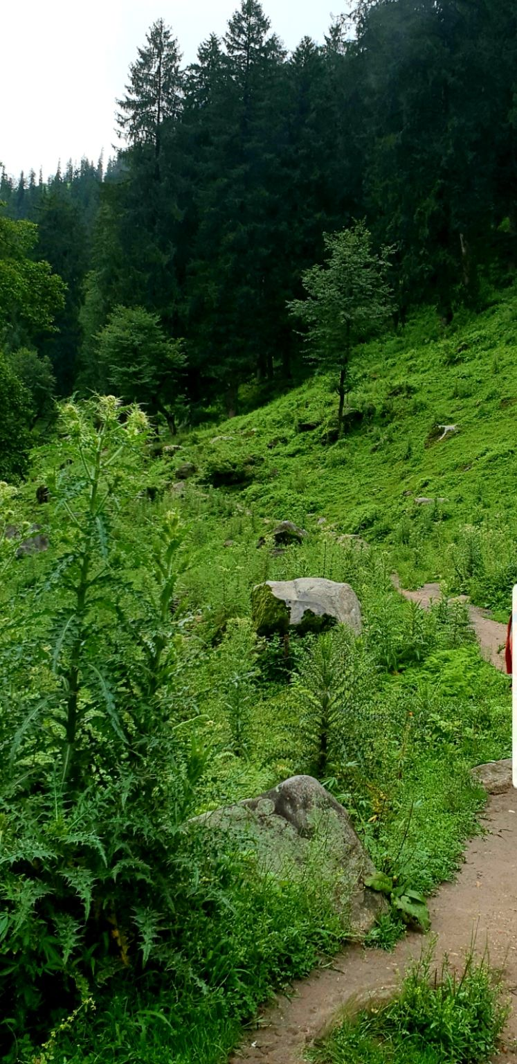 Photo of Kheer Ganga Trek By Amy2020