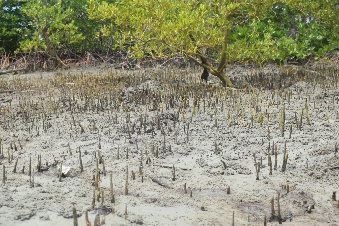 Photo of Andaman and Nicobar Islands By Nazeer Ashreff