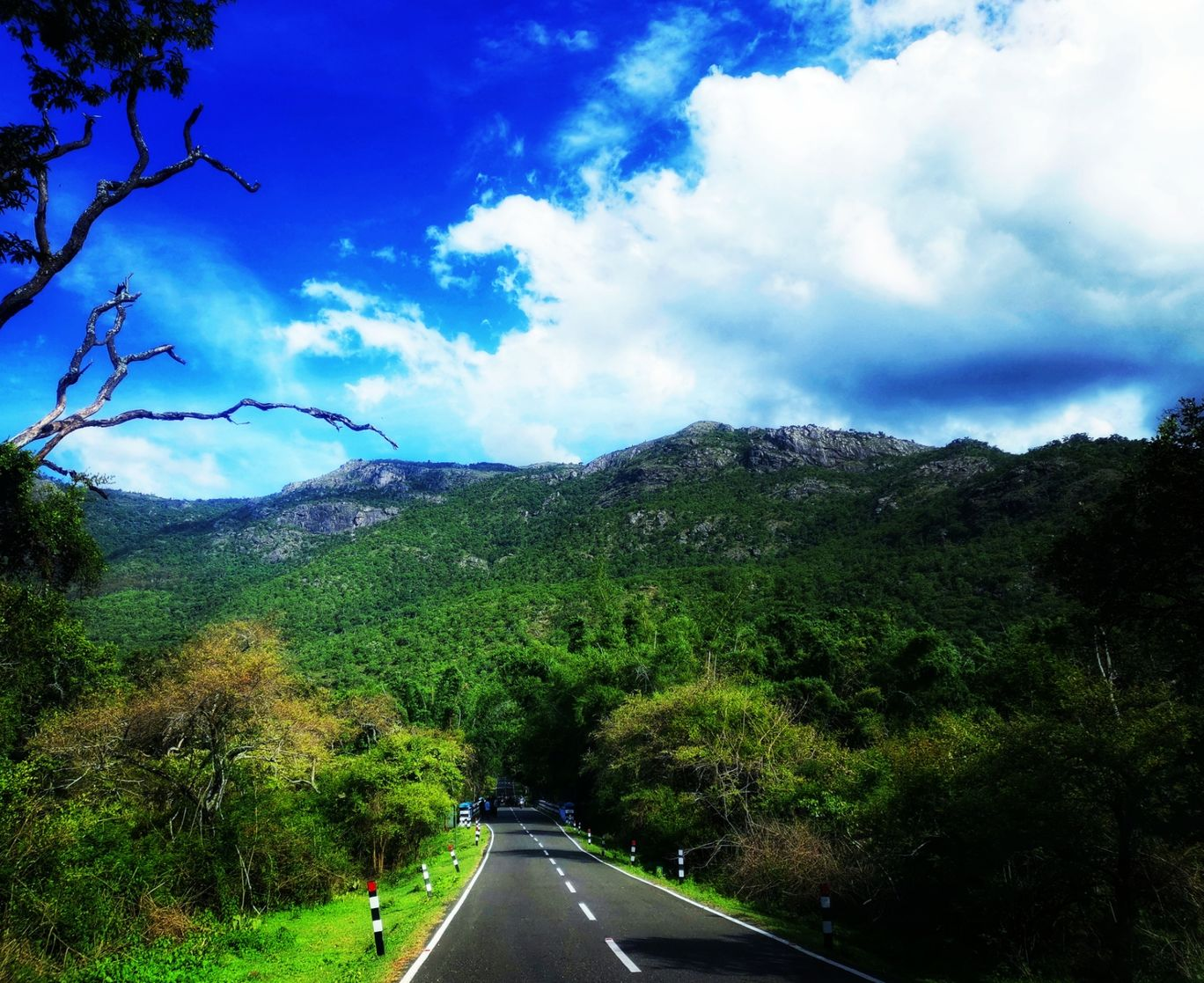 Photo of Nilgiri Mountains By Komal Chowbay