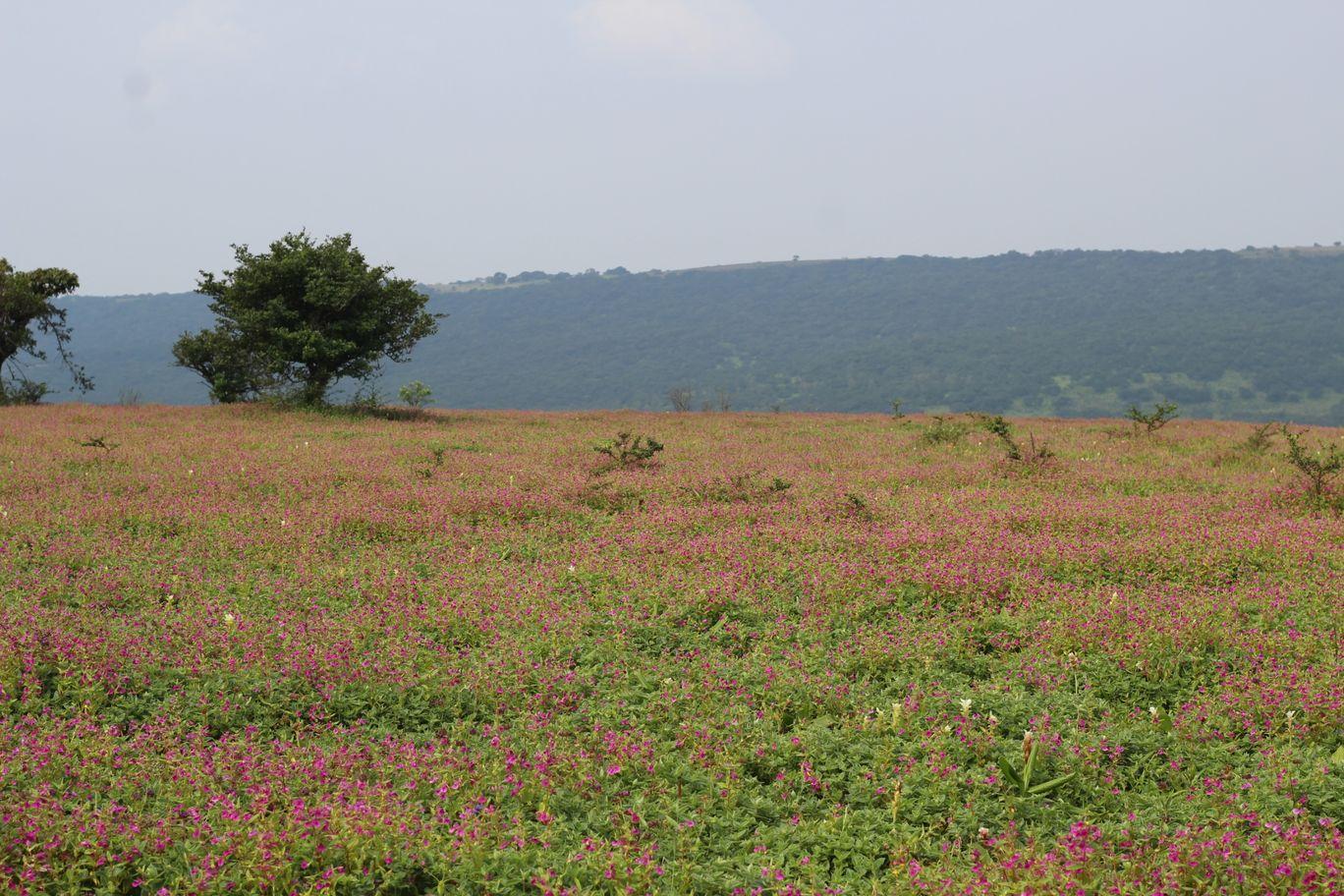 Photo of Kaas Platue (Valley of Flowers) By Mileandsmile