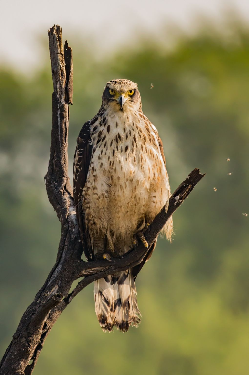 Photo of Keoladeo National Park By Akash Kapoor