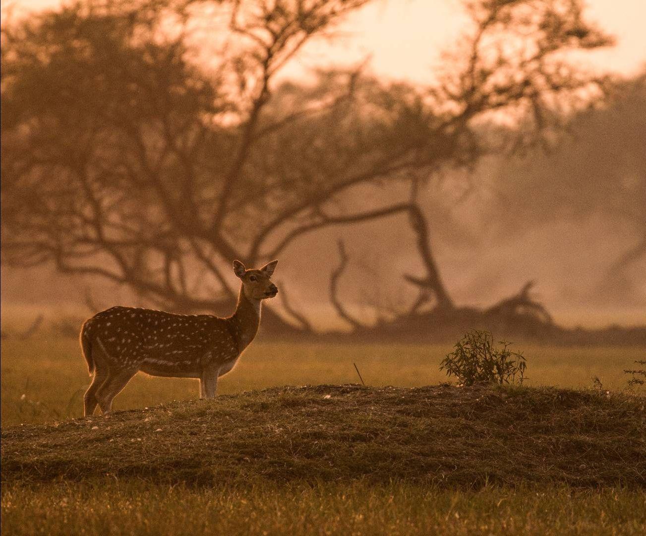 Photo of Bharatpur By Akash Kapoor
