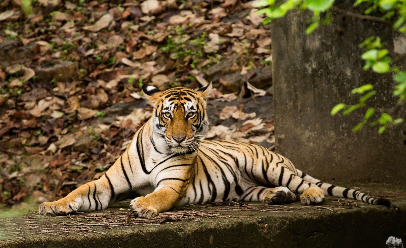 Photo of Ranthambore National Park By Akash Kapoor