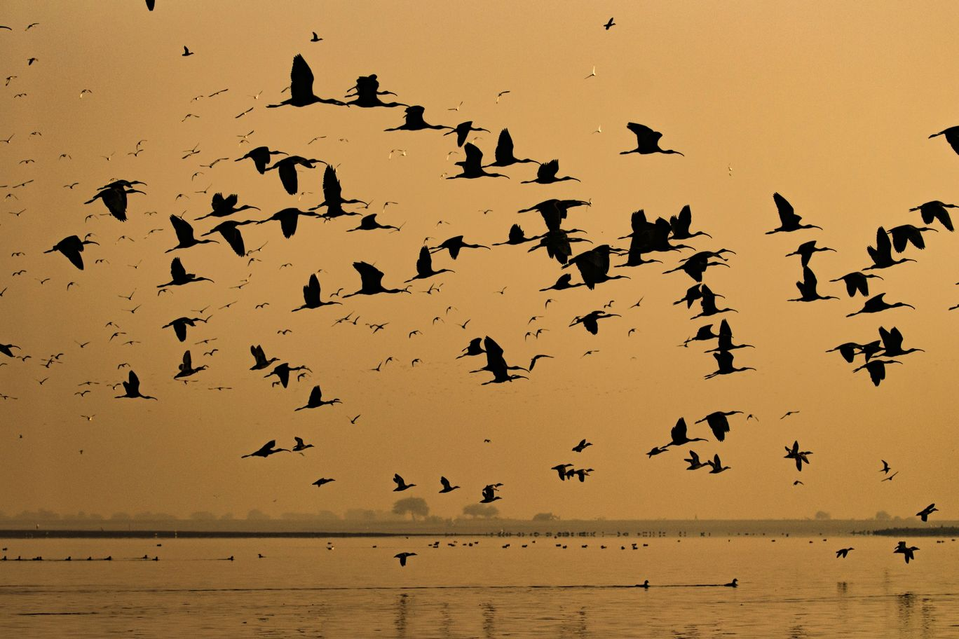 Photo of Bhigwan Bird Sanctuary By Akash Kapoor