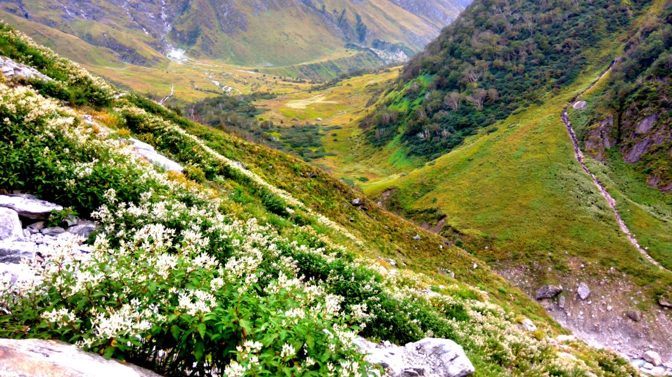 Photo of Valley of Flowers National Park By O Rahi Chal