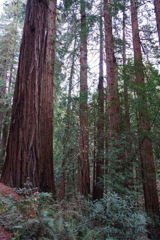 Photo of Muir Woods Visitor Center By Ajita Mahajan