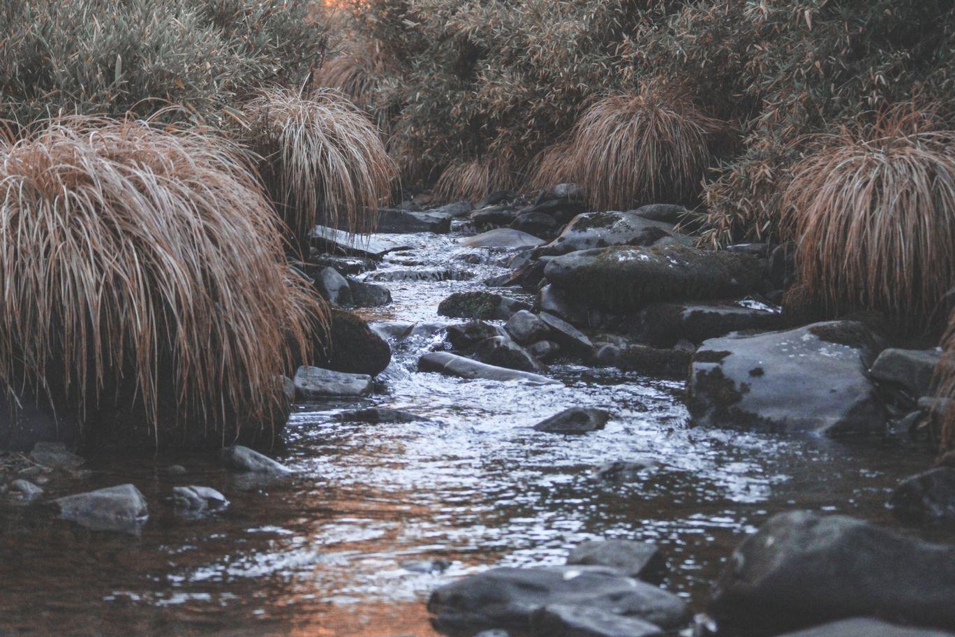 Photo of Dzükou Valley By wanderboy.inc