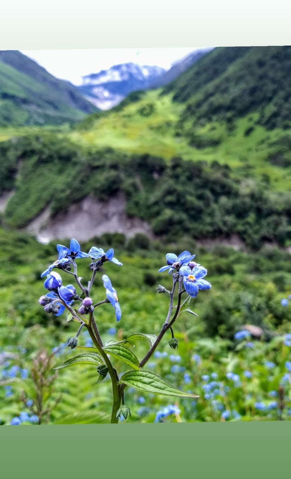 Photo of Valley of Flowers National Park By Nomad