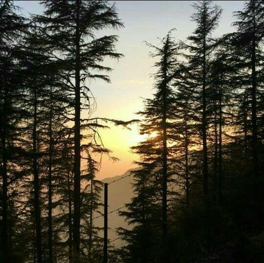Photo of Kanatal Camp Dhanaulti By Divya Aggarwal
