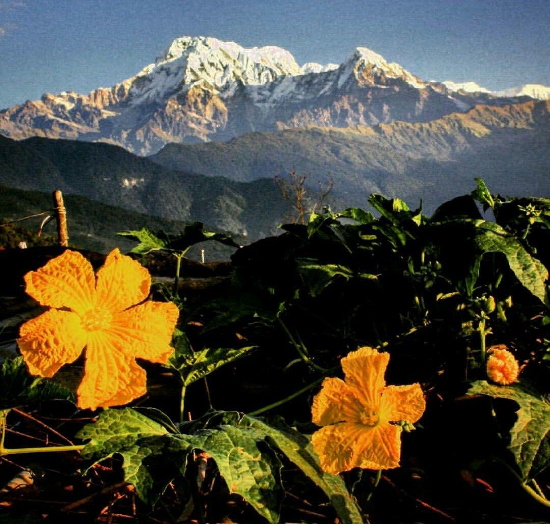 Photo of Kathmandu By Rachael Pereira