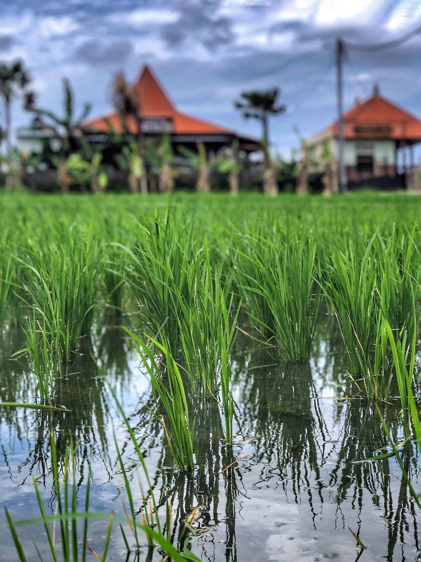 Photo of Bali By Megha Dhingra