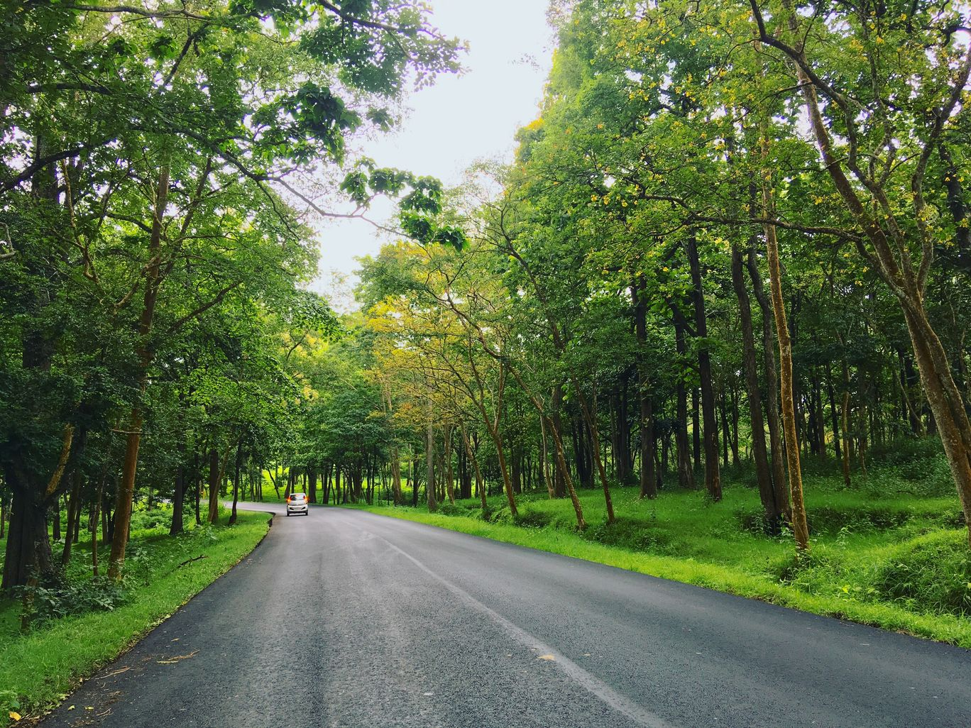 Photo of Muthanga Forest By Fathima Burhana