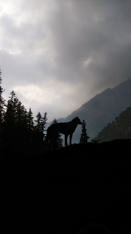Photo of Kheer Ganga Trek By Deepak Khushalani