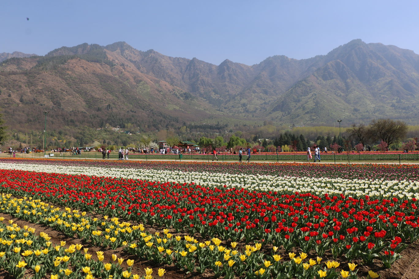 Photo of Tulip Garden Road By Amit Nigam