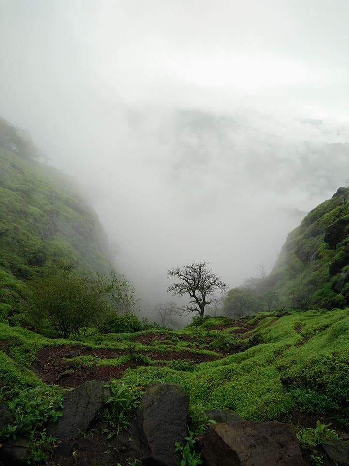 Photo of Raigad Fort By TRAFOCULAR As we travel