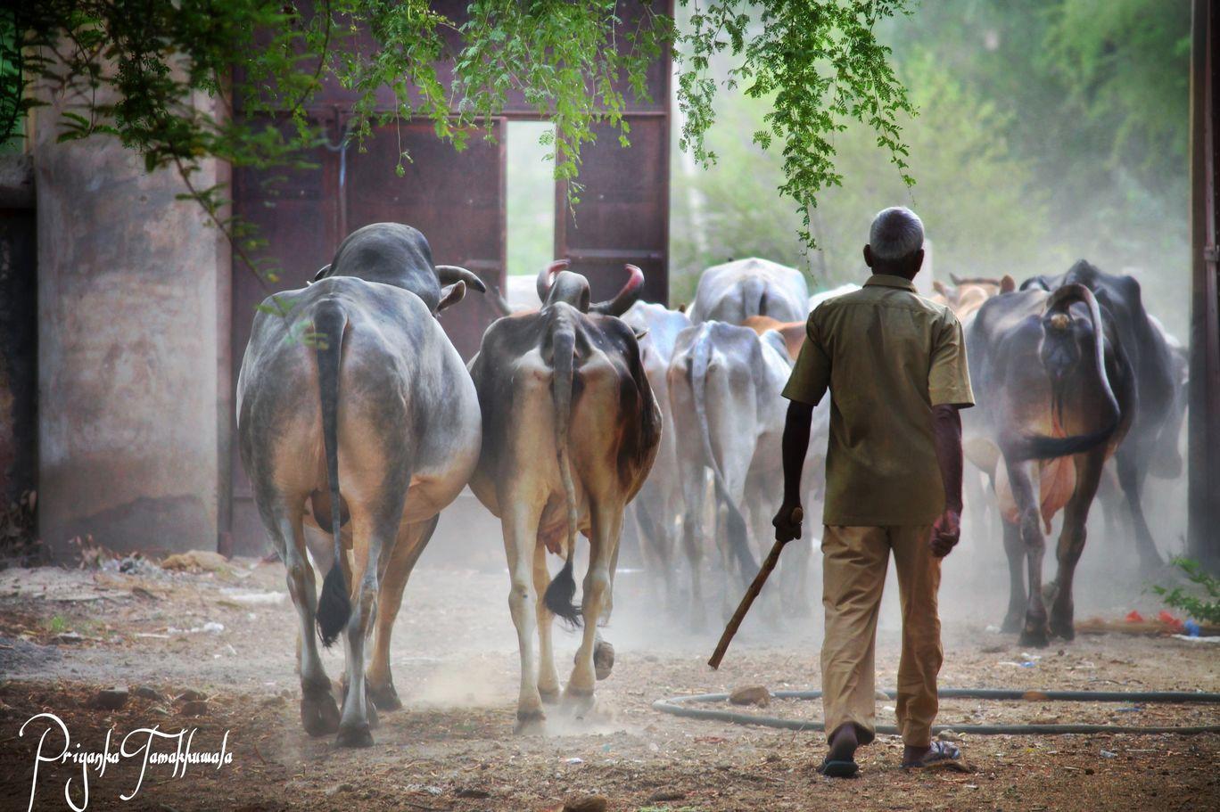 Photo of Jhunjhunu By priyanka tamakhuwala