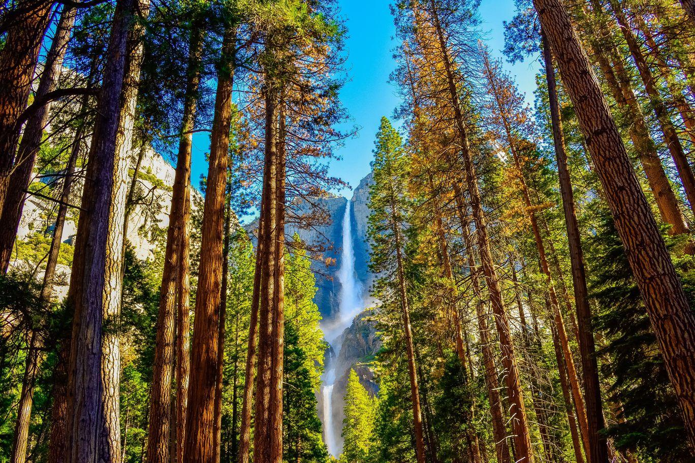 Photo of Yosemite By Chintan Patel