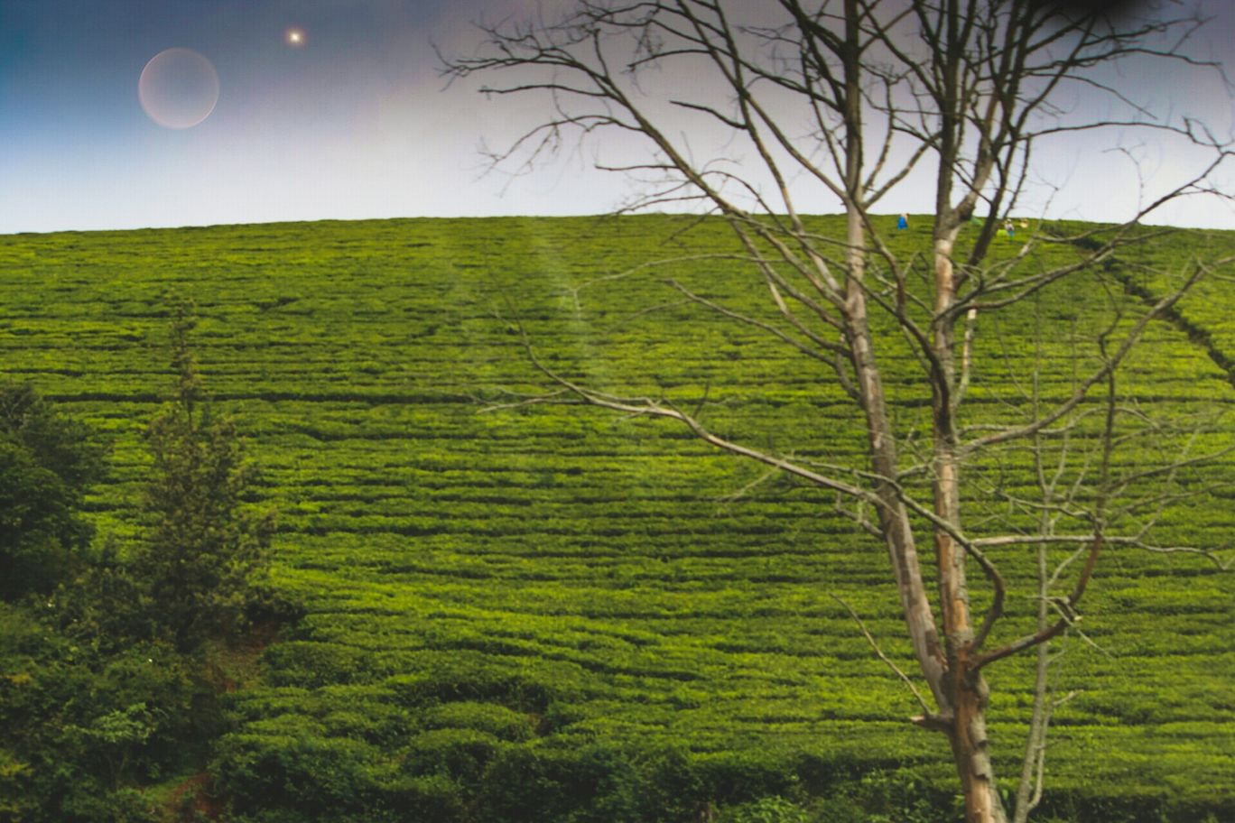 Photo of Coonoor By Mohit Aswal