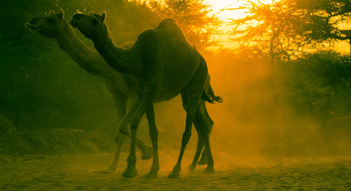 Photo of Pushkar By Vani