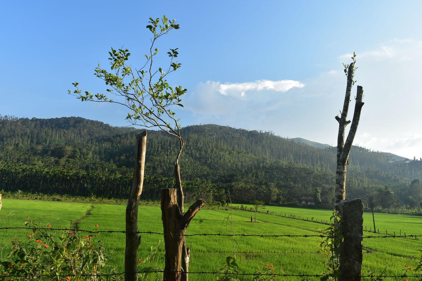Photo of Chikkamagaluru By Tejaswi N Rao