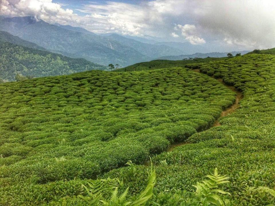 Photo of Darjeeling By Paulomi Guha