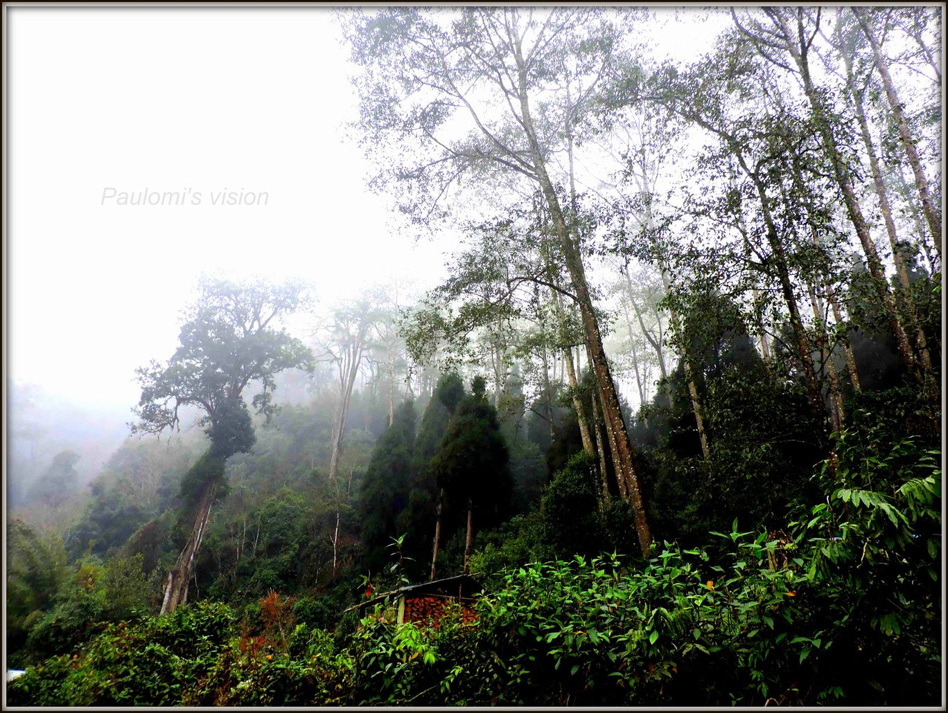 Photo of SILLERY GAON:The Best Nature Trail By Paulomi Guha