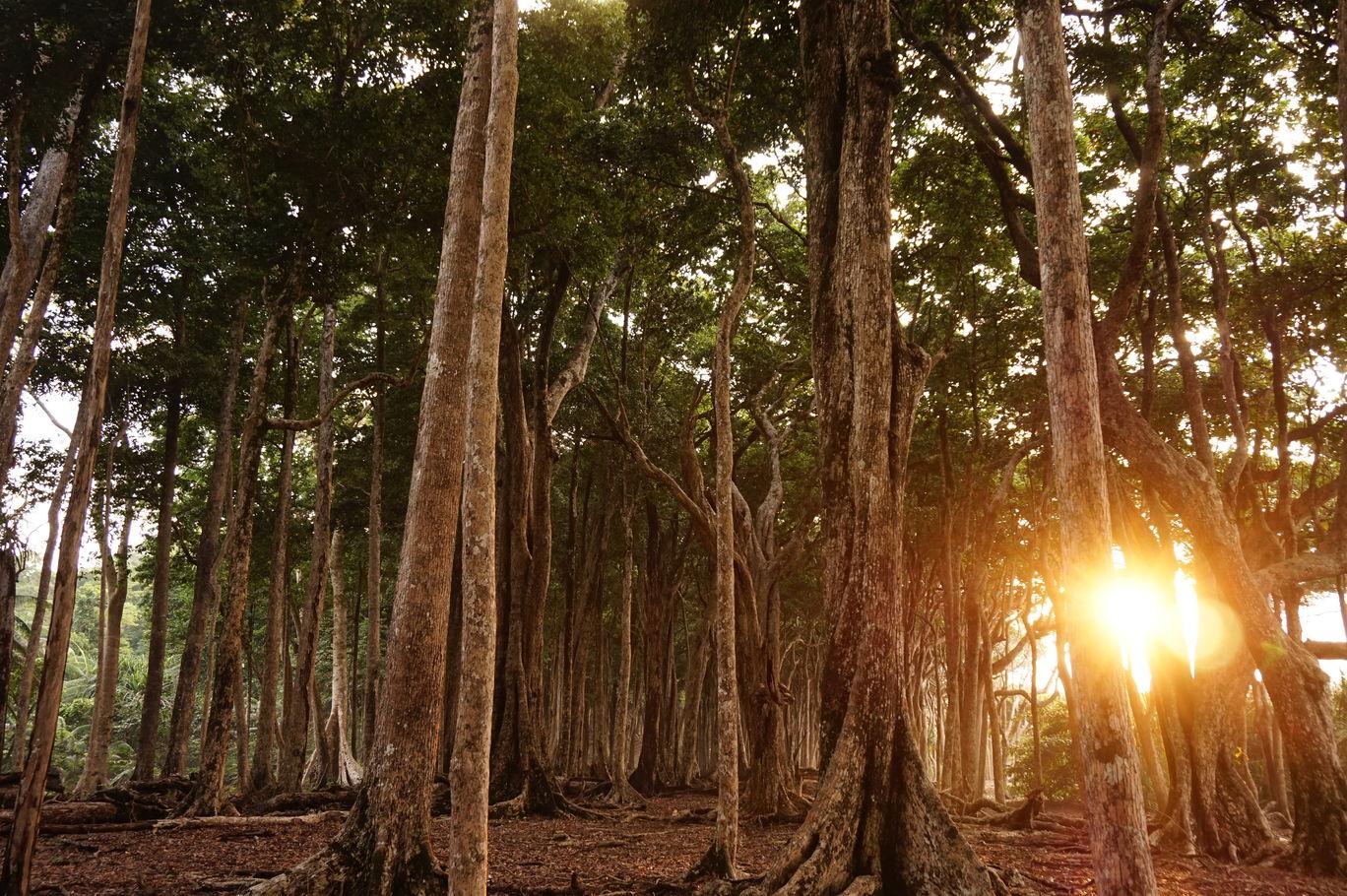 Photo of Andaman and Nicobar Islands By Karan Baath