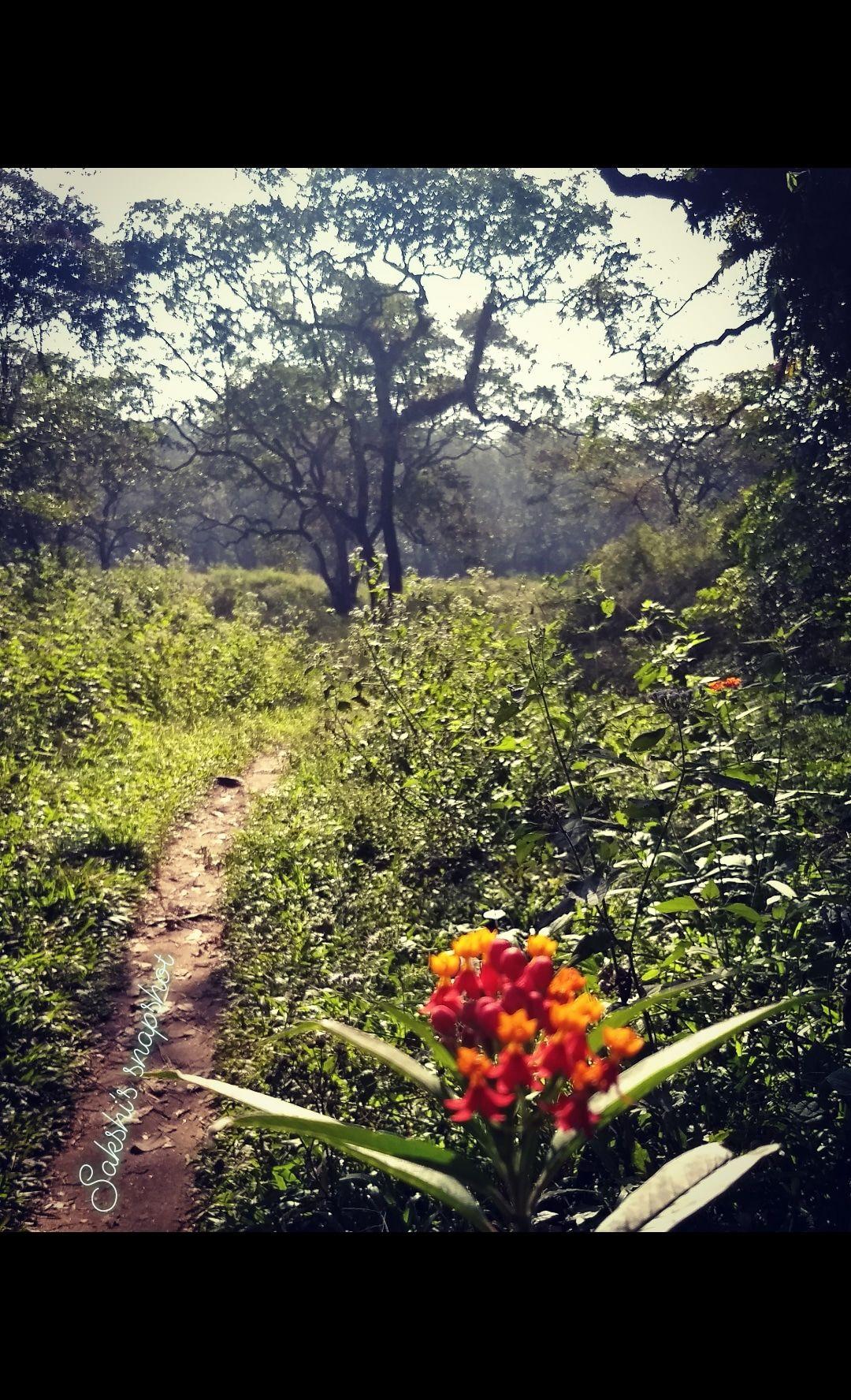 Photo of Periyar Tiger Reserve By sakshi mehta