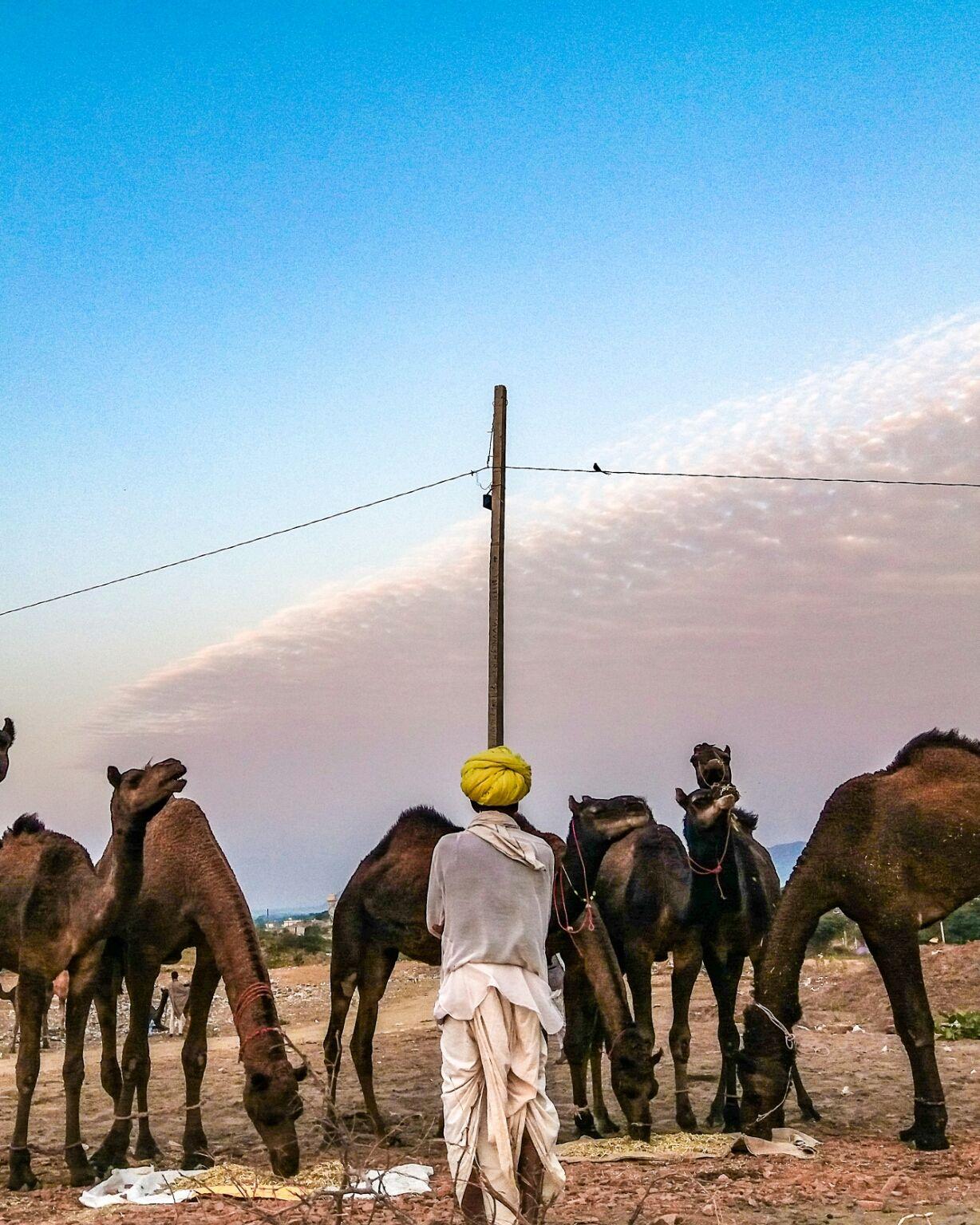 Photo of Pushkar By Rohit