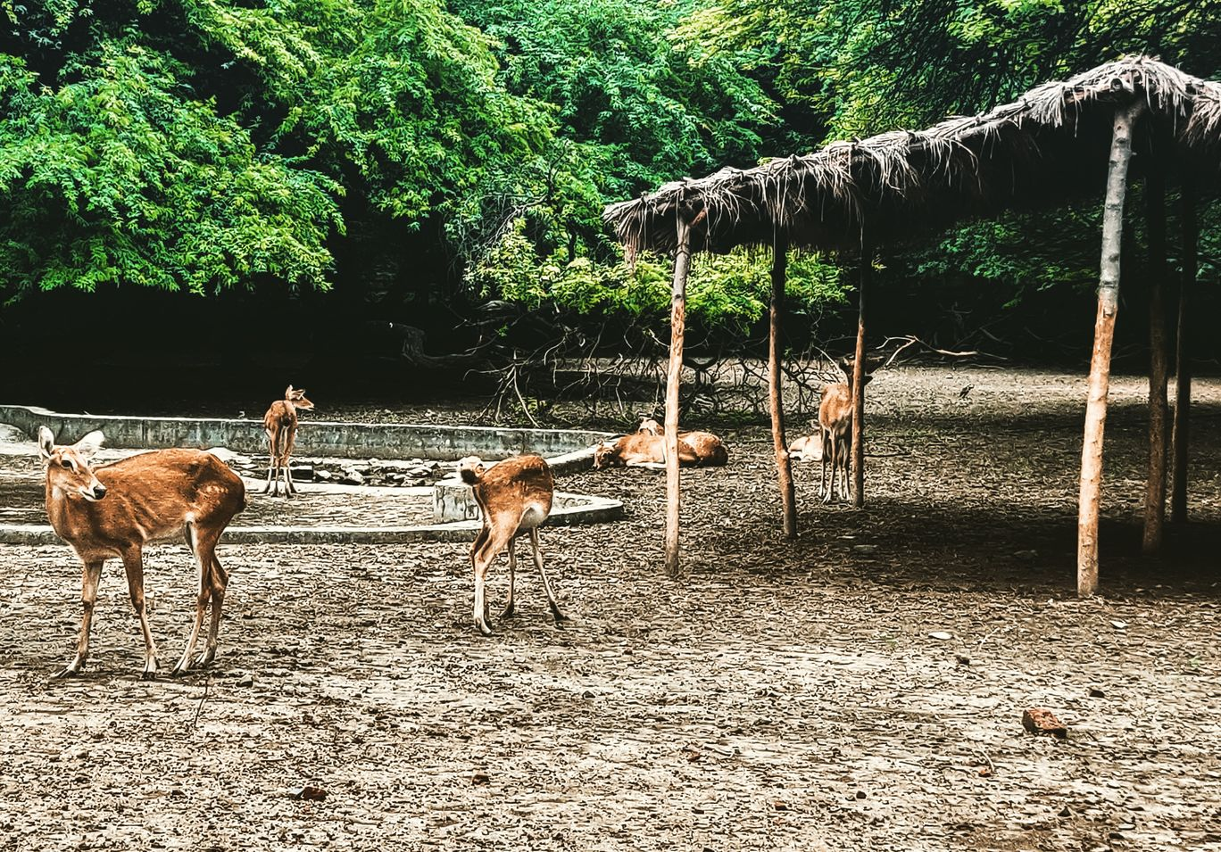 Photo of National Zoological Park By garima burman