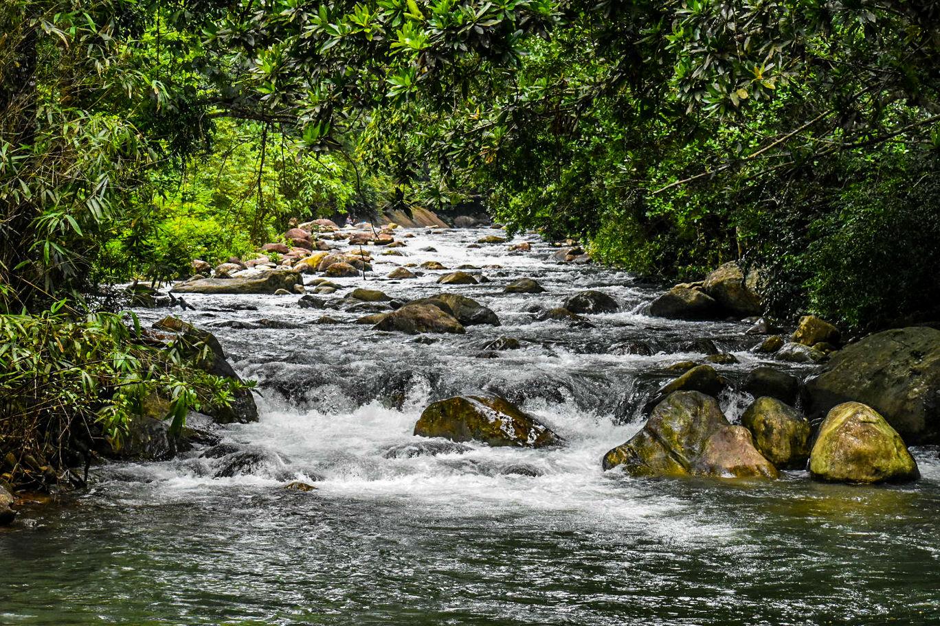 Photo of Meenmutty Waterfalls By Salma Nizar