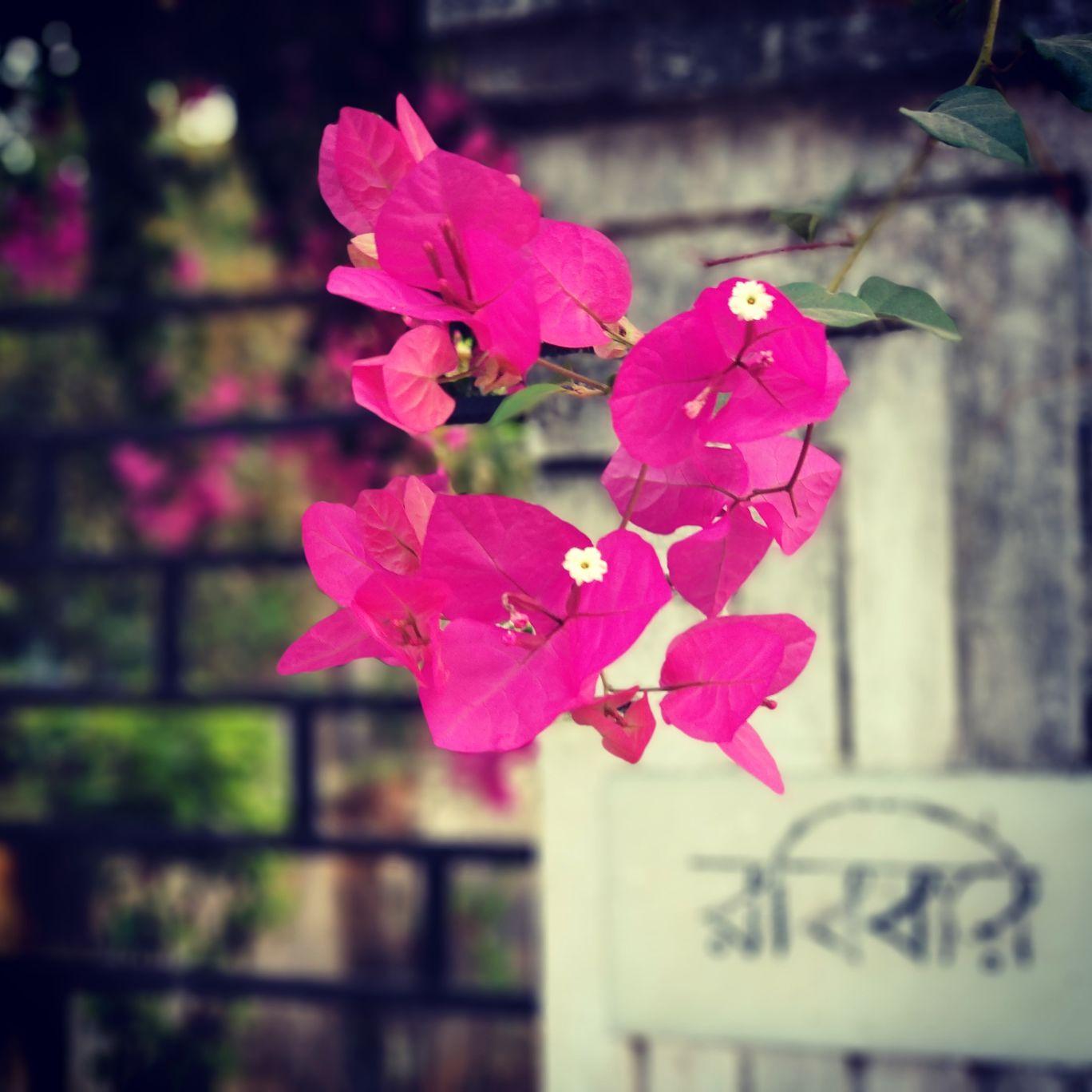 Photo of Santiniketan By Ishita Choudhury