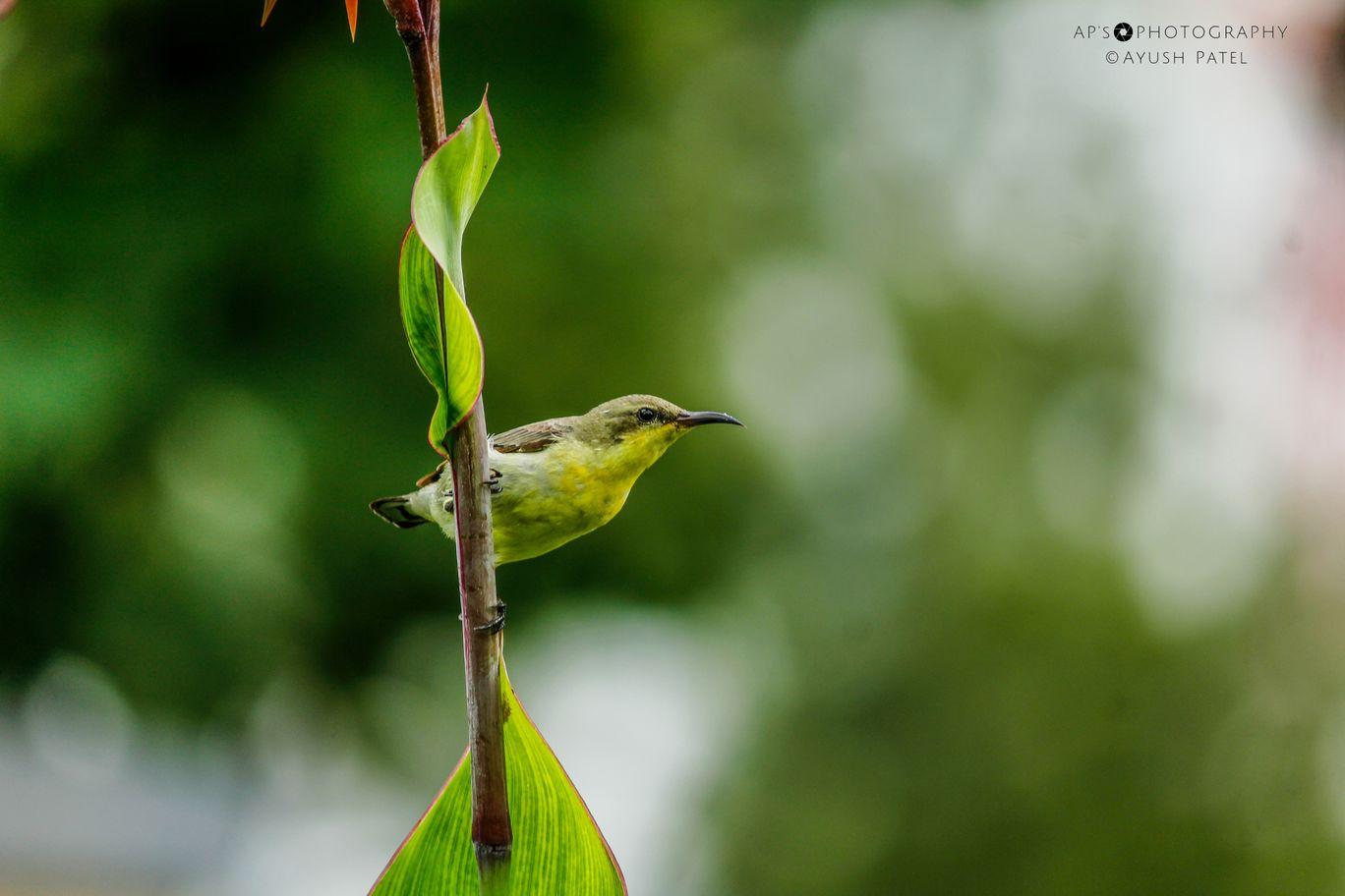Photo of Ahmedabad By Ayush Patel