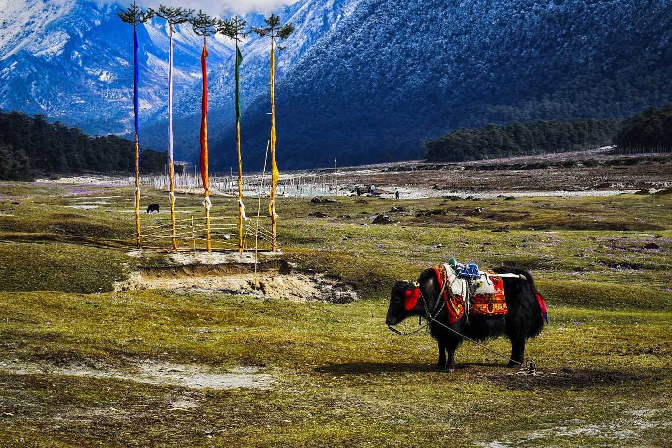 Photo of Yumthang By Shantanu Johri