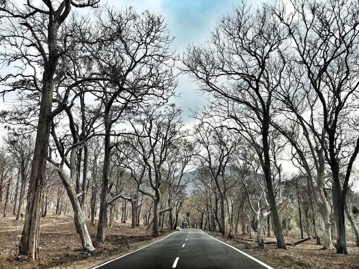 Photo of Bandipur National Park By Sakshi Gupta