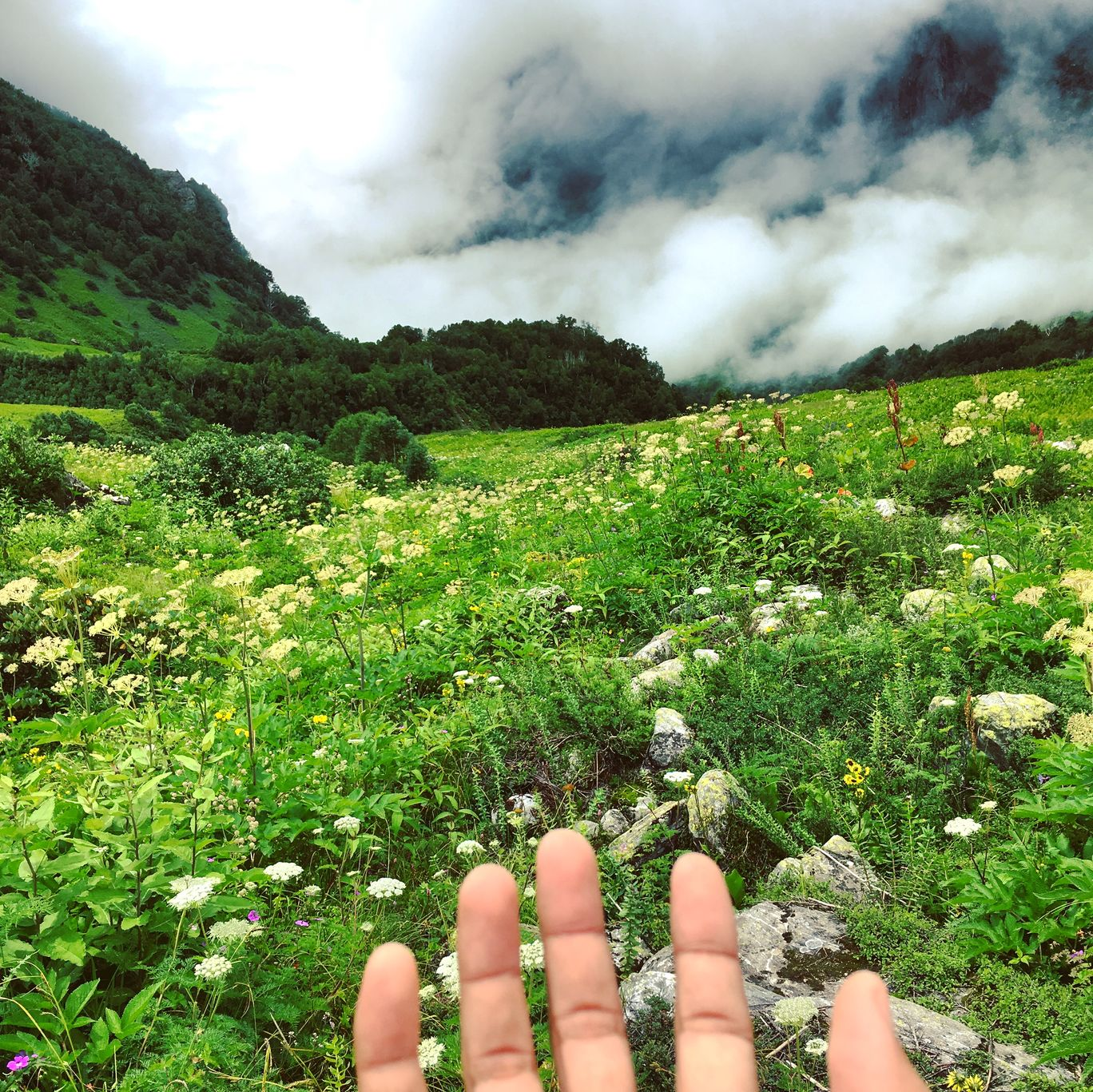 Photo of Valley of Flowers National Park By Rahul Cosec
